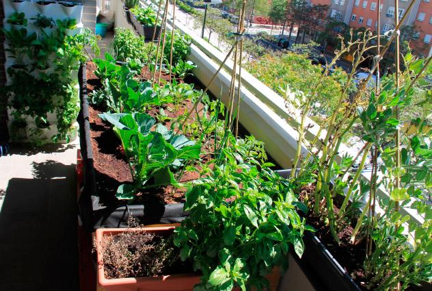 Crear un huerto en tu terraza
