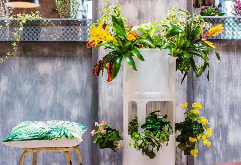 Trucos para que tus plantas de interior crezcan más fuertes